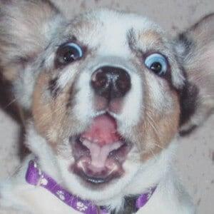 Dog looks shocked