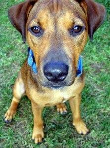 Closeup of a mixed breed dog