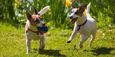 10 Indestructible Dog Toys for the Chew-inator in Your Life