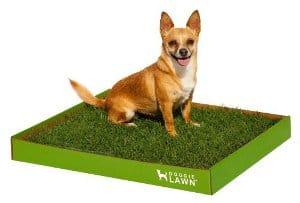 Doggielawn Disposable Dog Potty Box
