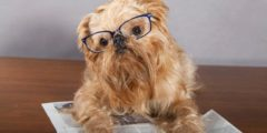 The 8 Types of Dog Stories on the Internet
