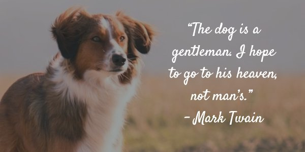 Mark Twain Picture Quote About Dogs. U201c