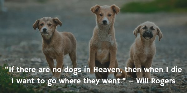 Dog Gone: 20 Inspirational Quotes About Losing a Dog ...