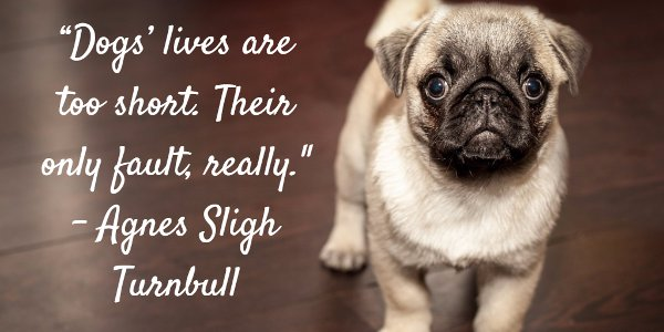 Agnes Sligh Turnbull Picture Quote About The Sadly Short Lives Of Dogs. U201c