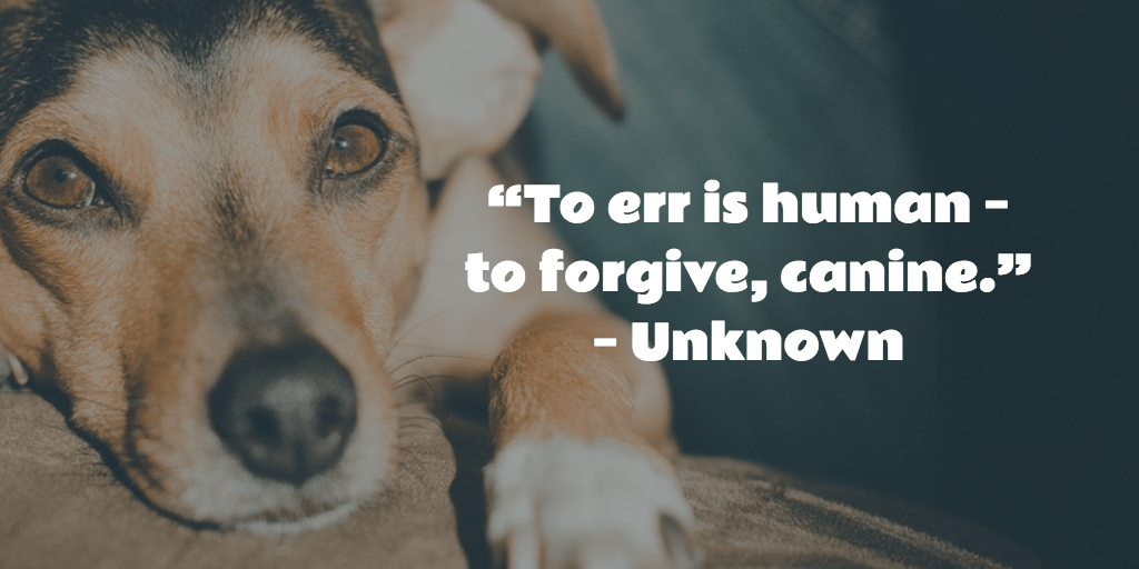 To err is human - to forgive, canine. - Unknown
