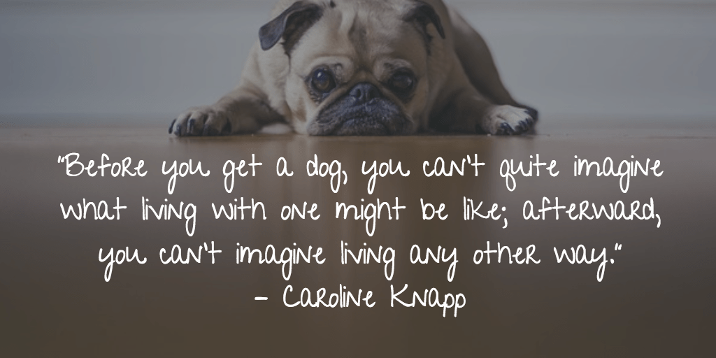 Before you get a dog, you can't quite imagine what living with one might be like; afterward, you can't imagine living any other way. - Caroline Knapp