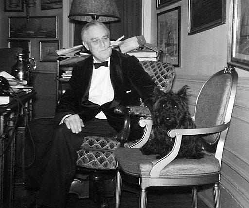 Photo of President Roosevelt with his famous Scottish Terrier Fala